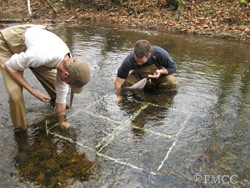 Release of Propogated Mussels at Bales Ford, Powell, TN