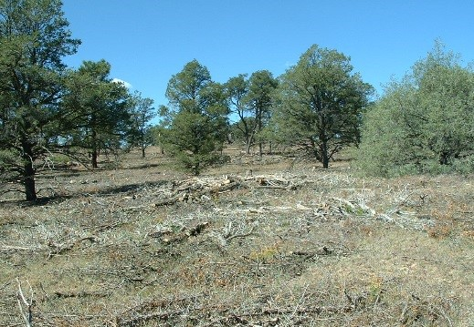 Juniper and Pinyon Stands After Thinning Treatments