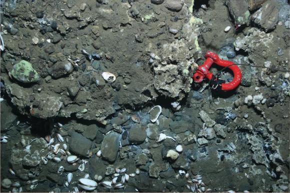 In-situ photograph of authigenic carbonate (sample 2017-STN40)