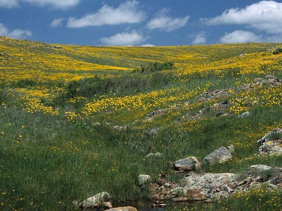 Wichita Mountains Wildlife Refuge. Credit: Elise Smith
