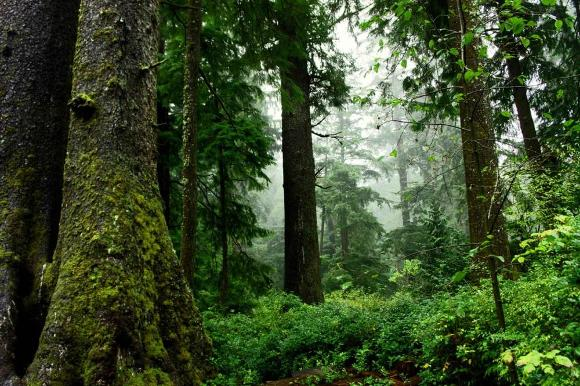 Forest Growth. Credit: David Patte - FWS
